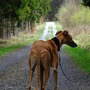 Krombachtalsperre Hunde